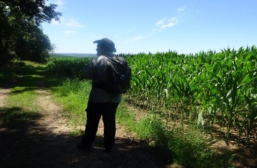Foto-Tour: Wandern auf dem Moselsteig von Perl nach Palzem.