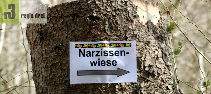 Narzissenfest in Schillingen.