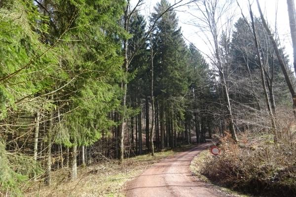 Der Serriger Wald sorgt für genügende  Fichten-Wettkampf-Nadeln .