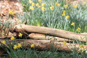 Frühlingsboten der Natur.