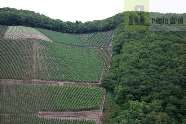 """Serrig gilt als das """"Tor zum Saarwein. Aus südlicher Richtung findet man hier die ersten Rebflächen (Weinguts Würtzberg)."""