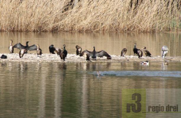 Ein besonderes Erlebnis ist der ornithologischen Rundgang durch das Haff Réimech.
