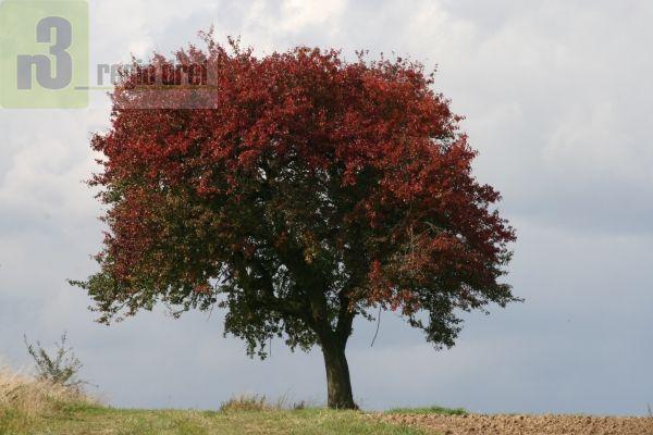 Herbstbilder – Region