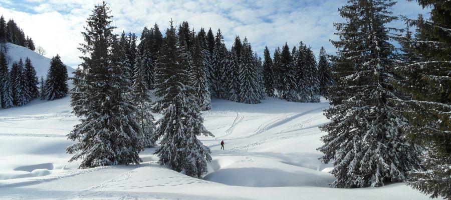 Weihnachtsgruss von regiodrei.de