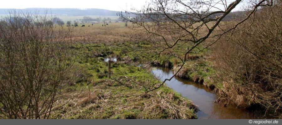Das Feuchtgebiet Panzbruch ist seit 1983 Naturschutzgebiet.
