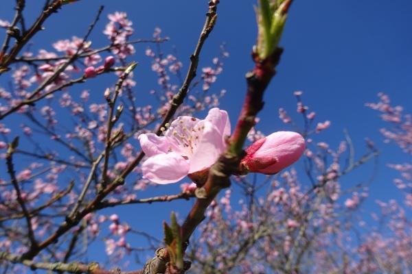 Frühlingsblumen im Mai