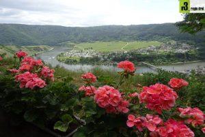 Wandern auf dem Moselsteig: Von Schweich nach Mehring.