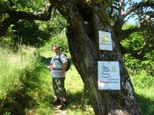 Wandern auf dem Moselsteig: Von Mehring nach Leiwen