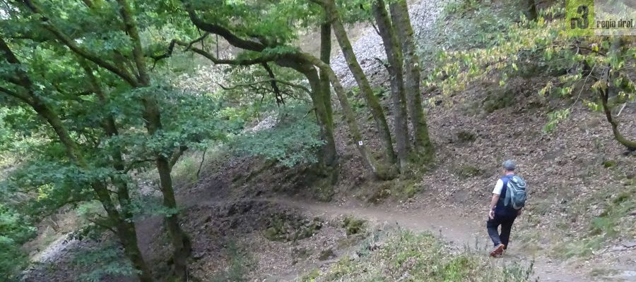 Der Cloef-Pfad auf dem Steilhang an der Saarschleife.