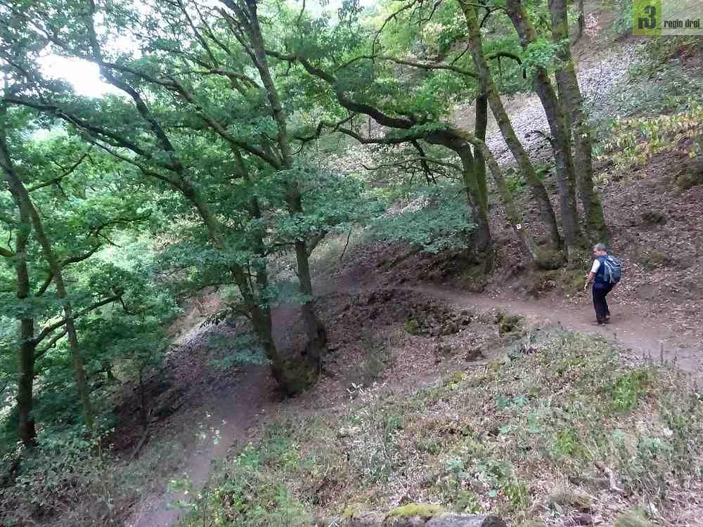 Wandern an der Saar: Cloef-Pfad und Burg Montclair