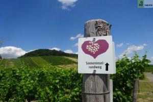 Wandern auf dem Moselsteig: Von Neumagen-Dhron noch Osann-Monzel