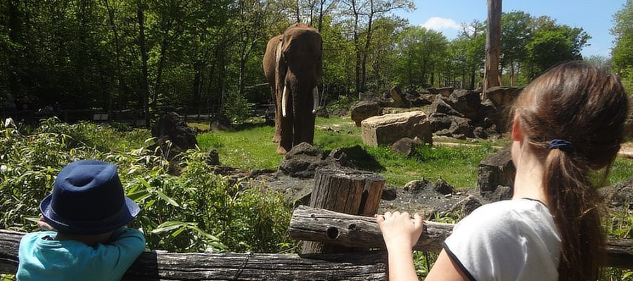 Elefantengehege im Zoo d'Amnéville: Der Zoo ersreckt sich über 18 Hektar mit 2.000 Tieren aus fünf Kontinenten. Mehr als als 500.000 Besucher besuchen jährlich diesen Zoo im Nordosten Frankreichs. Foto: Archiv
