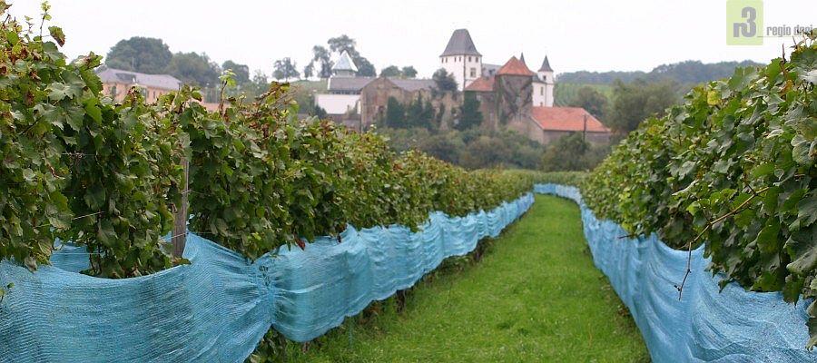 Weinanbau in Perl-Nennig an der Obermosel im Dreiländereck.