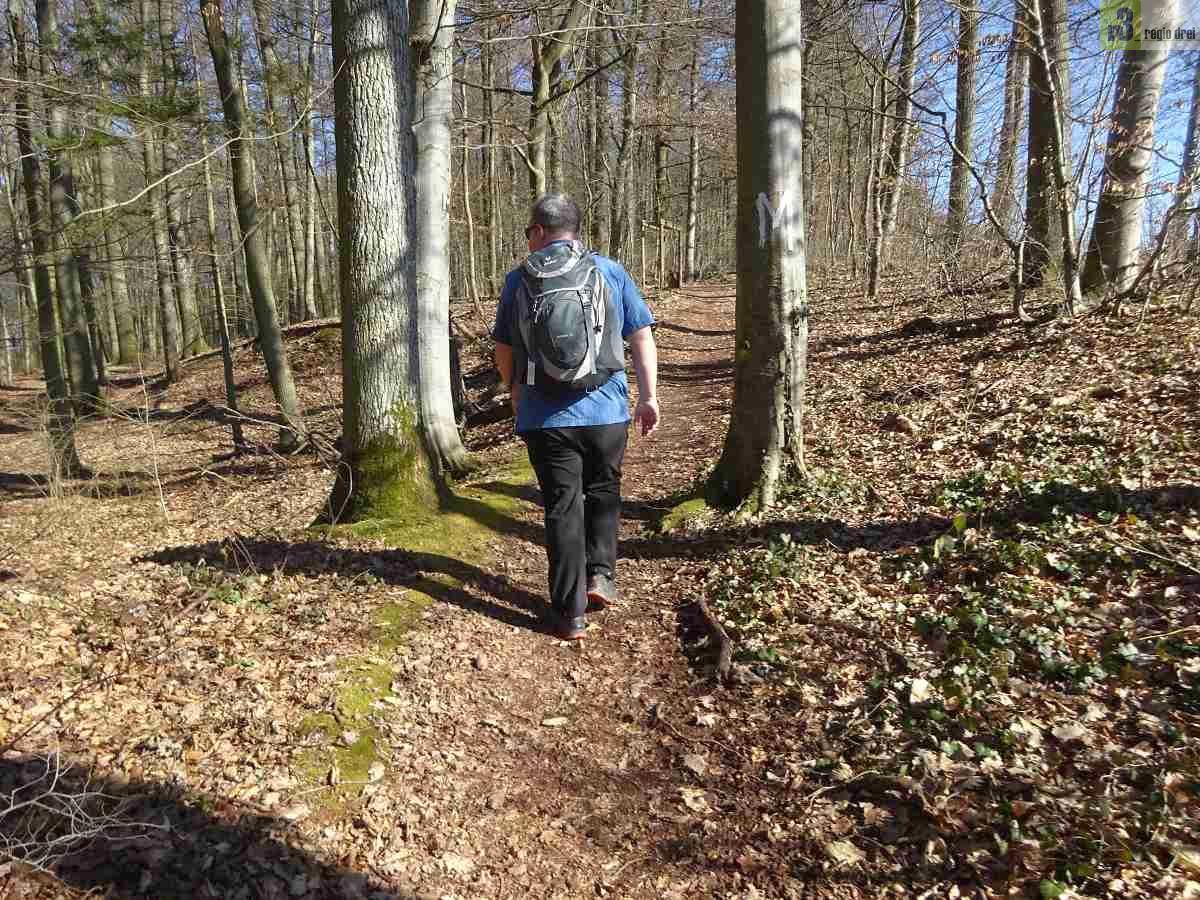 Wandern auf dem Moselsteig: Von Ürzig nach Traben-Trarbach