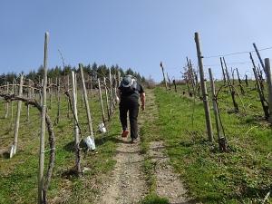 Steiler Anstieg durch die Weinberge.